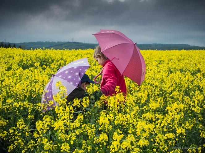 sebastien wiertz_color storm in the field